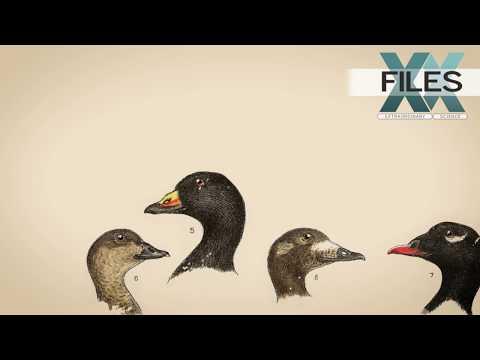 XX Files : Animalia genitalia : Duck surprise [CLIP]