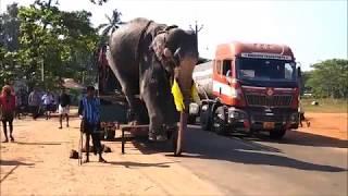 Panmana Pooram 2018 //// Panmana Major Sree Subramahnya Swamy Temple