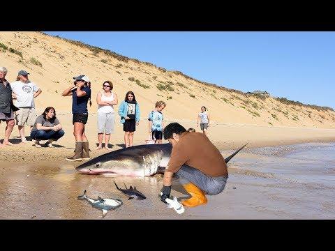 Xxx Mp4 Amazing Man Help Dead Shark Give Birth To 3 Baby Shark On The Beach 3gp Sex