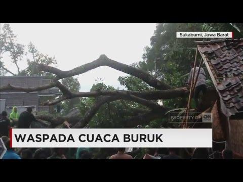 Pohon Mahoni Berumur Ratusan Tahun Tumbang, Timpa Warga yang Sedang Tidur