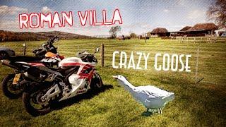 Bignor Roman Villa and a Crazy Goose