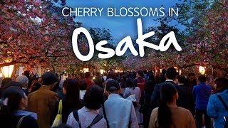 1 Week a Year: Cherry Blossoms at the Osaka Mint, Japan
