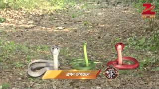 Bedeni Moluar Kotha - Episode 35  - March 25, 2016 - Webisode