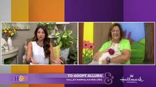 Larissa Wohl Pet Adoption: Allura