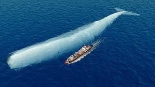 La historia real de Moby Dick es más increíble de lo que jamás contaron | Mocha Dick