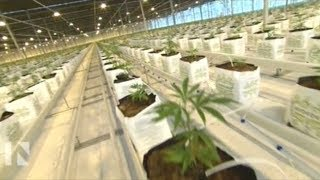 Canadian Investors In LEGAL U.S. Cannabis Businesses Being Permanently Banned From United States!