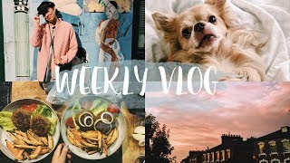 Sportmotivation und Cookies&Scream - vegan und glutenfree! #WEEKLVLOG
