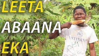 LEETA ABAANA EKA - Ugandan Comedy skits.