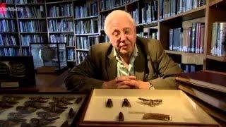 Attenborough's Natural Curiosities Season 2 Episode 4
