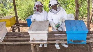 Rebuilding Rwanda one beekeeping cooperative at a time