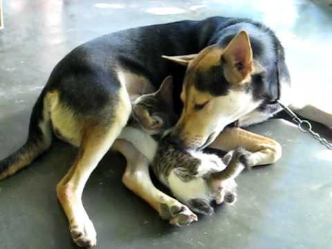 Xxx Mp4 Virgin Dog Breastfeed Abandoned Cat 3gp Sex