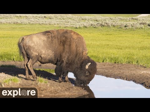 Bison Water Hole Grasslands National Park powered by EXPLORE