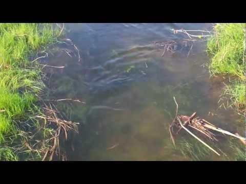 ловля воблы в апреле на волге видео