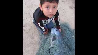 Save the Whales - Vaquita: Countdown to Extinction