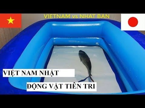 Xxx Mp4 Viet Nam Vs Nhat Ban Các Nhà Tiên Tri Động Vật Dự đoán Trận Việt Nam Vs Nhật Bản ASIAN CUP 2019 3gp Sex
