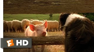 Babe, the New Sheepdog - Babe (4/9) Movie CLIP (1995) HD