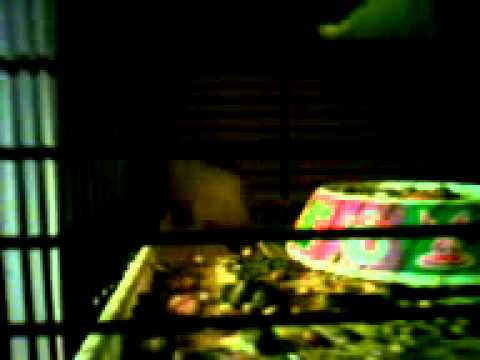Crazy hamster xxx.3gp