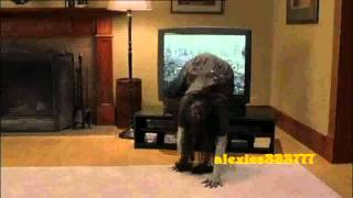 Scary Movie 3 Brenda Vs  The Ring  Deutsch-German - Kopie.mp4