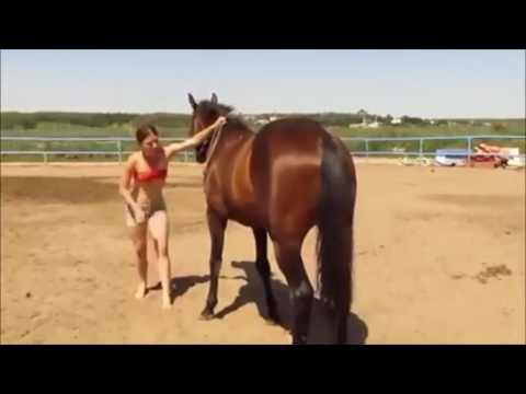 Xxx Mp4 Girl Vs Horse Funny 3gp Sex