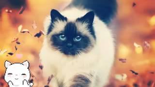 7 zdjęć kotów :)😺🐱🐈