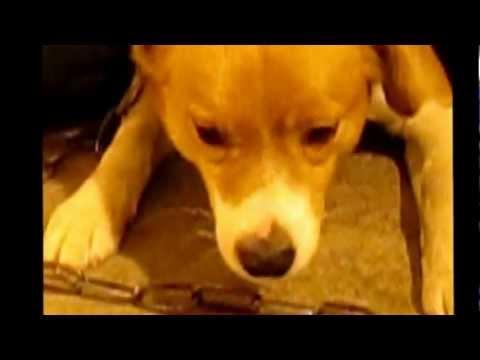 Xxx Mp4 Спасение собачки в Пожарной части с Хлевное 3gp Sex