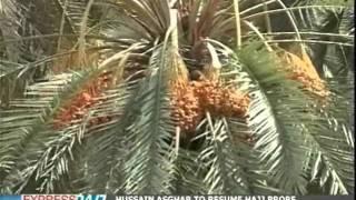 Ramazan: Season of dates in Pakistan