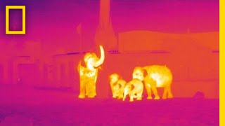 How Infrared Technology Could Help Fight Wildlife Poaching   National Geographic