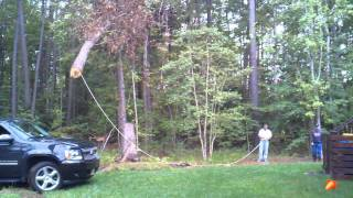 How to pull a tree down