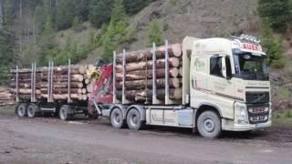 Auer Holztransporte  Gußwerk