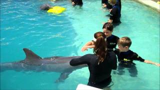 Children Swim with Dolphins Miami