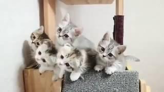 Film kucing mengikuti lagu