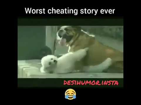 Xxx Mp4 Funny Ad Dog Funny Dog Chudai Chudne Ki Kahani 3gp Sex