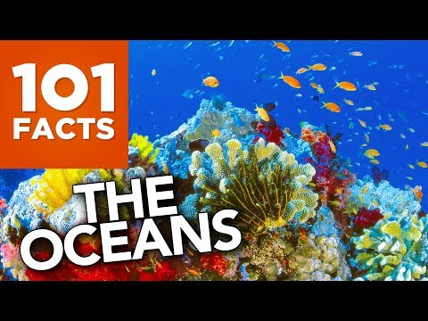 Xxx Mp4 101 Facts About The Oceans 3gp Sex