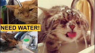 THESE CATS ARE BROKEN! (Ultimate Funny TikTok Animal Memes Compilation)