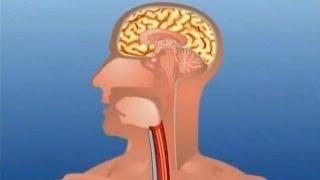Learn - Human Body Part - Internal - Kids Educational Videos