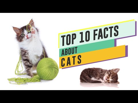 Top 10 Facts About Cats |