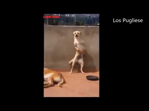 Perros bailan Scooby Doo Papá!!!!