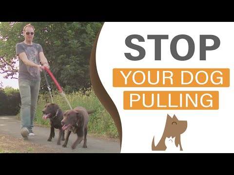 How to train your dog to heel on a loose leash: Dog Training in London