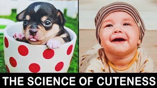 The Science Of Cuteness with Top 5 Cutest Animals in The World Vlog#23 by HooplakidzLab