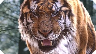 THE TIGER Movie TRAILER (Action, Adventure - 2016)