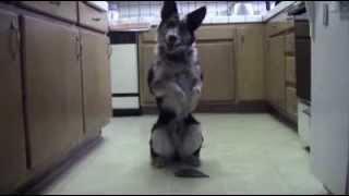 Wyszkolony pies przez Amerykańskiego żołnierza