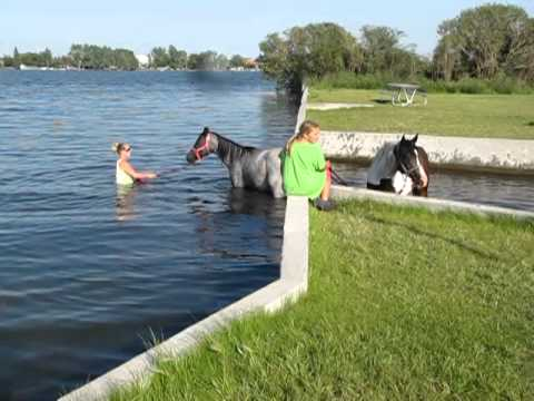 horses first time playing in water.MOV