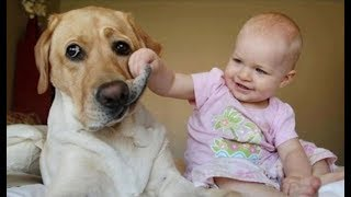 Babies Laughing Hysterically at Dogs Compilation 2014