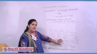 Digestive System of Humans Part 1 - NEET AIPMT AIIMS Zoology Video Lecture [RAO IIT ACADEMY]