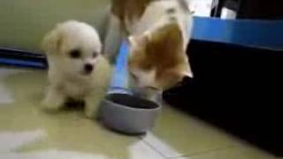 Cat VS Dog  really funny Video   Download for Free on Mobango com