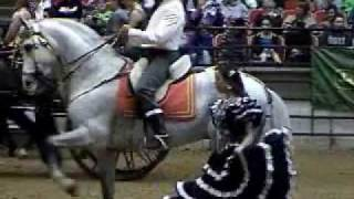 2010 Midwest horsefair Andalusian and Lusitano
