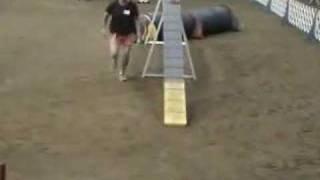 Binkie's Competition Running Dogwalk