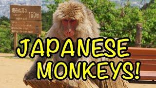 MONKEYS + ARASHIYAMA + FUSHIMI INARI SHRINE | JAPAN EP7