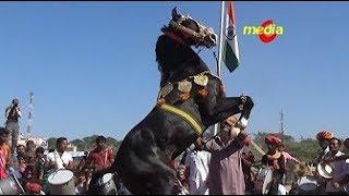 Horse Dance Competition at Pushkar Cattele Fair in Rajasthan 2016   fun & entertainment
