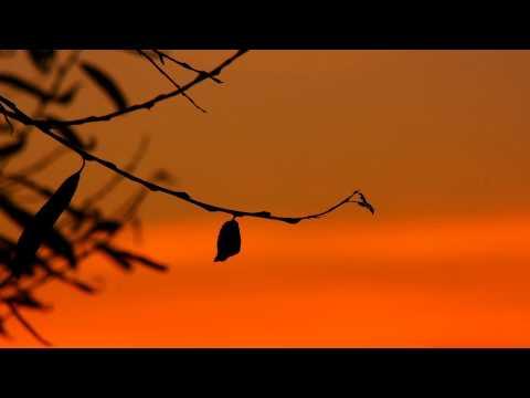 Extremely Powerful Morning Mantra to Start the Day | 432Hz | Om Shri Anantaha
